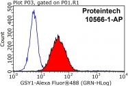 10566-1-AP - Glycogen Synthase
