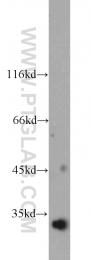 12791-1-AP - HAAO
