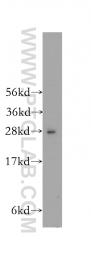 12453-1-AP - HS2ST1 / 2OST
