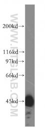 15631-1-AP - HSDL2