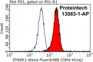 13083-1-AP - IFNAR1