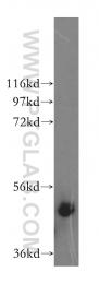 17534-1-AP - IFT52
