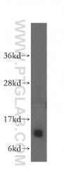 15970-1-AP - IMMP2L