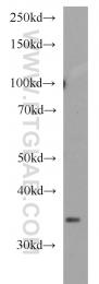 13991-1-AP - LEFTY2