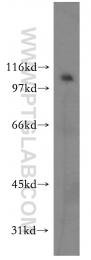 12281-1-AP - LEO1