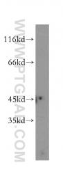 12956-1-AP - LIPA