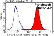 24662-1-AP - LRPAP1 / A2MRAP