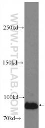 24666-1-AP - LRSAM1