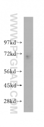 14602-1-AP - MAGE-6
