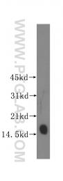 12135-1-AP - LC3
