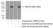 21648-1-AP - MESP2