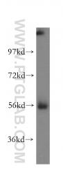15772-1-AP - MGAT2