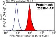 23898-1-AP - CD10 / Neprilysin