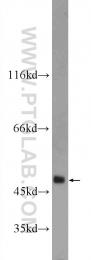 22989-1-AP - MMP-12