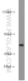 55467-1-AP - MMP-20