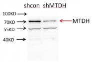 13860-1-AP - MTDH