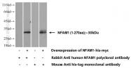 14310-1-AP - NFAM1