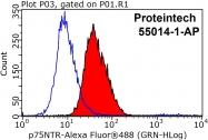 55014-1-AP - CD271 / NGFR