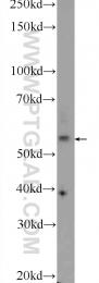 24065-1-AP - NHEDC2