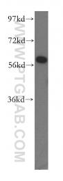 16060-1-AP - NMD3