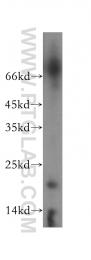 16719-1-AP - OBFC2A