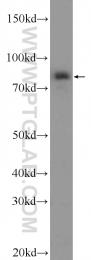 24284-1-AP - PAPOLG