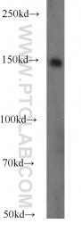 14396-1-AP - PASK