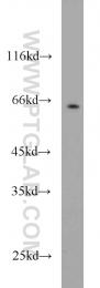 10102-1-AP - CDK16 / PCTK1