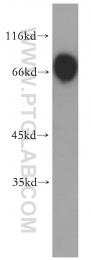 13463-1-AP - PER1