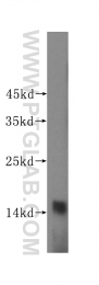 16045-1-AP - PFDN4