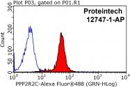 12747-1-AP - PPP2R2C