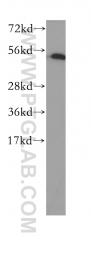 10773-1-AP - DNA primase small subunit