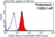 11825-1-AP - RAG2