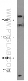 10069-1-AP - RB1CC1