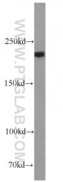 17250-1-AP - RB1CC1