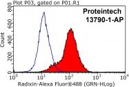 13790-1-AP - Radixin / RDX
