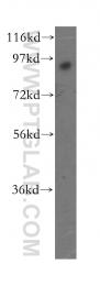 16936-1-AP - RNF10