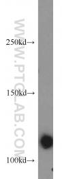 15621-1-AP - RNF40