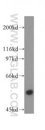 13743-1-AP - RNMT