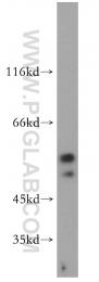 13874-1-AP - EDG8 / S1P5