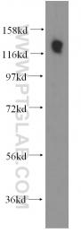 11840-1-AP - SDCCAG1