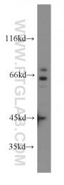 13471-1-AP - SDCCAG8