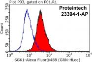 23394-1-AP - SGK1 / SGK
