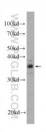 60305-1-Ig - SGTA