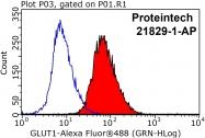 21829-1-AP - GLUT1 / SLC2A1