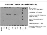 51069-2-AP - SMAD4
