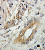 10842-1-AP - Alpha-Synuclein / SNCA
