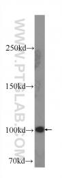 60265-1-Ig - SND1