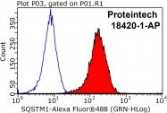 18420-1-AP - SQSTM1
