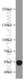 20260-1-AP - TAF1